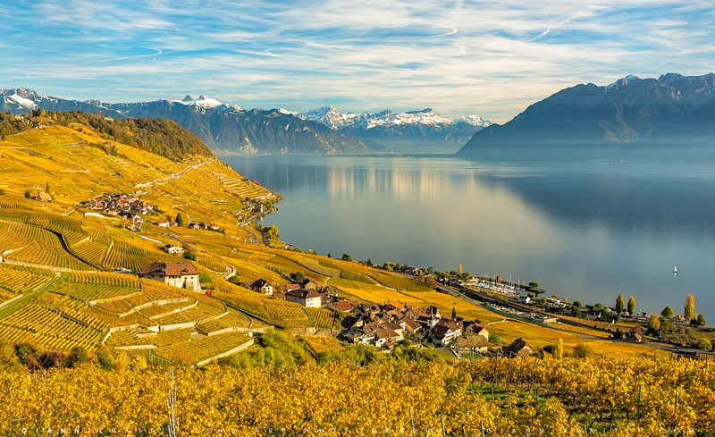Golden Wine of Lavaux
